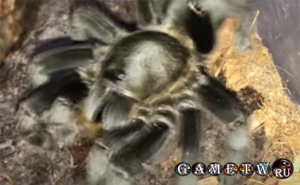 Арахнофобия – «Боязнь пауков»
